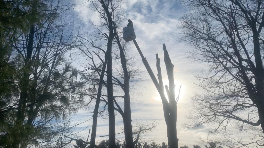 Forestry / Tree Care Bucket Trucks